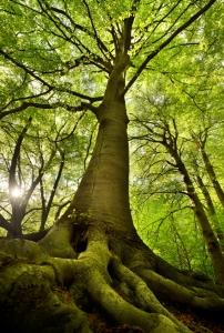 עץ החיים שלך