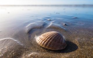 להנות מצדף על חוף הים